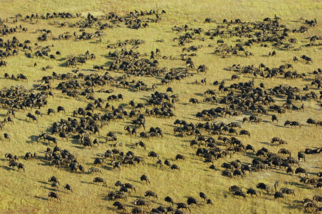 New Safari Camp in Liuwa Plain, Zambia, Casalio Travel, Urlaub, Reisen