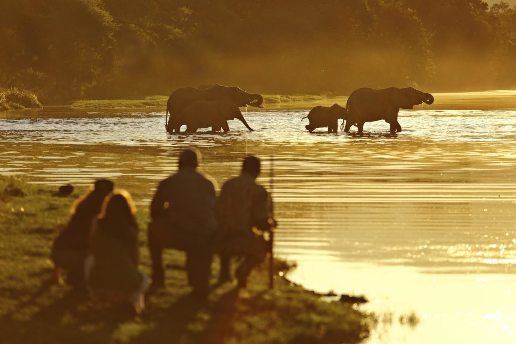 African Safari, Best Safari, Luxury Travel, Adventure, Casalio, CasalioTravel, Reisen, urlaub