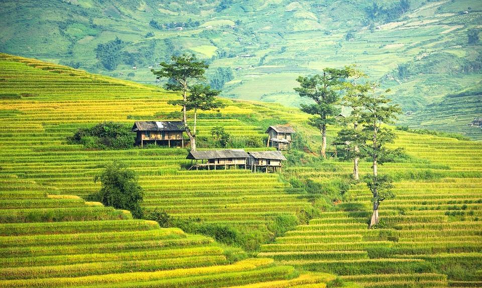 Bali Rice 3